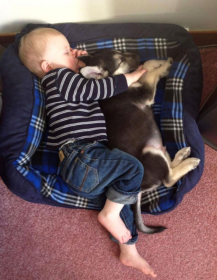 blog_yummypets_votre_enfant_a_besoin_dun_chien_1_12_2015
