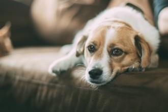 Vermifuger son chien et son chat : explications et conseils…