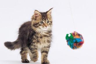 Les 6 sens du chat