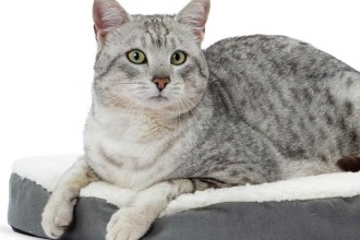 le langage du chat expliqu yummypets. Black Bedroom Furniture Sets. Home Design Ideas