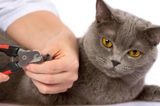 Comment couper les griffes de mon chat ?