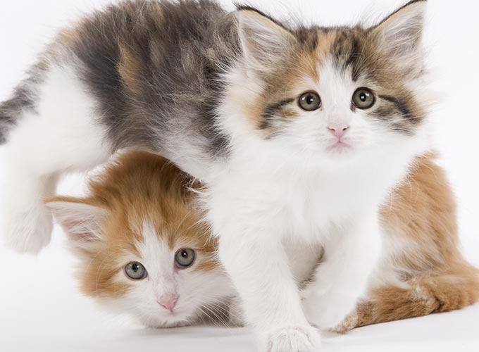 3 erreurs d ducation ne pas commettre chez le chaton yummypets. Black Bedroom Furniture Sets. Home Design Ideas