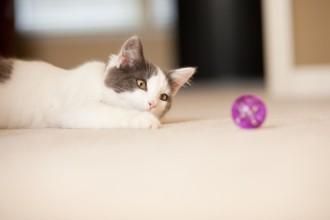 Comment bien jouer avec son chat ?