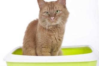 Quelle litière choisirpour mon chat ?
