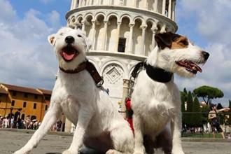 6 raisons pour voyager avec votre chien !