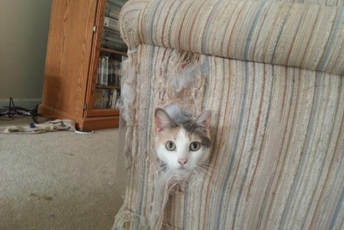 si vous avez grandi avec un chat, vous vous reconnaîtrez ! - yummypets