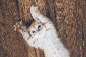 15 choses que vous ne saviez pas sur l'adoption d'un chat