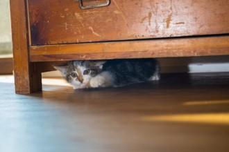 9 signes qui montrent que votre chat est trop stressé