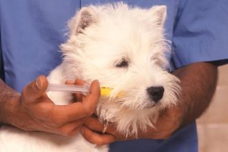 Comment donner un médicament à mon chien?