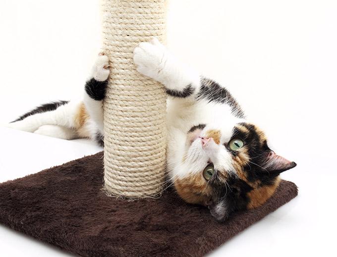 griffoir chat le bon coin