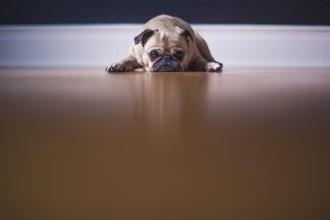 5 mauvaises habitudes à ne pas prendre avec son chien