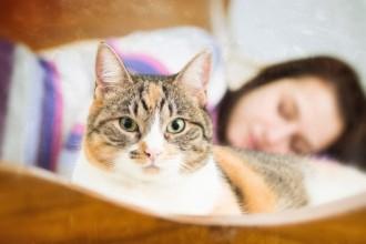 5 raisons de dormir avec son chat