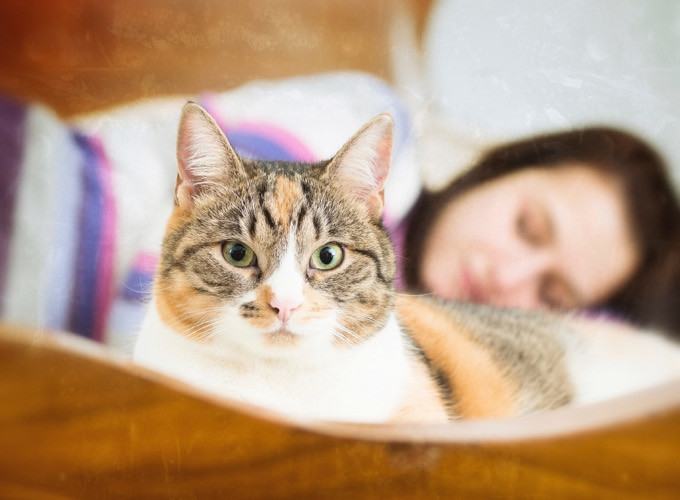 5 raisons de dormir avec son chat yummypets. Black Bedroom Furniture Sets. Home Design Ideas