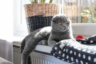 Une journée dans la vie d'un chat