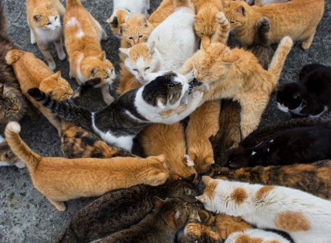 un candidat la mairie de rome utilise des chats contre les rats yummypets. Black Bedroom Furniture Sets. Home Design Ideas