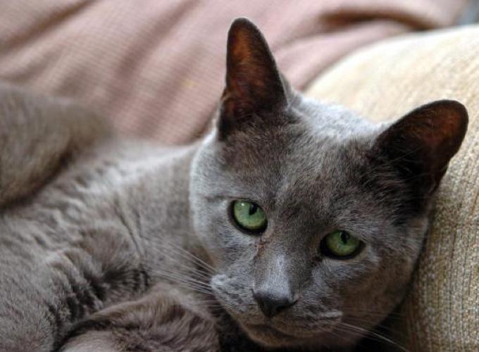 Canap chat suite canap pour chien et chat nettoyer - Enlever odeur pisse de chat ...