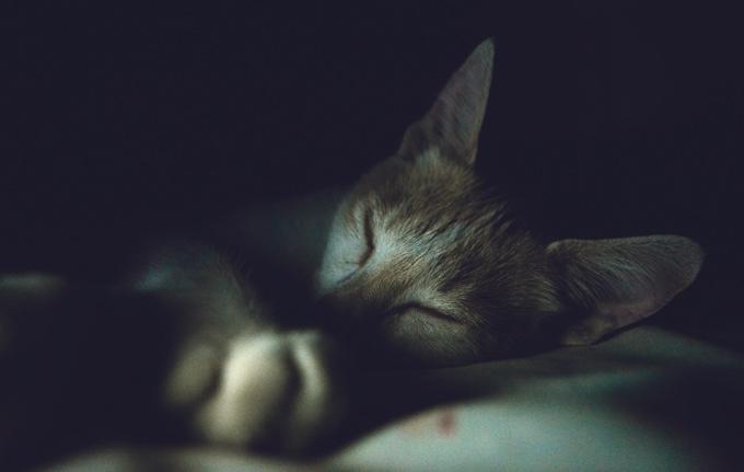 """Résultat de recherche d'images pour """"chat nuit"""""""