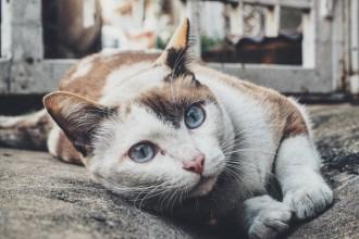 8 façons de préparer votre chat à devenir senior
