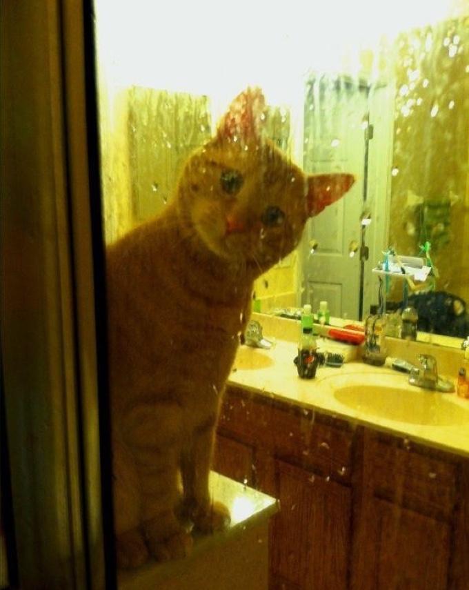 10 chats qui ne veulent pas laisser leur ma tre seul sous la douche yummypets - Chat qui dort sur son maitre ...