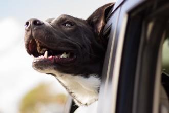 5 Astuces pour que votre chien soit en sécurité dans une…