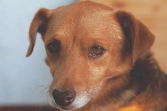 Votre chien ressent-il la tristesse ?