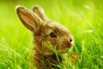 Idées de noms pour rongeurs et lapin
