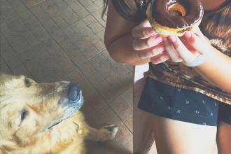 Le sucre pour les chiens : mauvais pour la santé