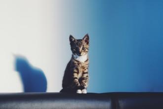 7 astuces pour habituer votre chat à vivre en intérieur