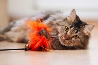 6 raisons de jouer plus régulièrement avec son chat