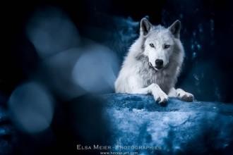 Meet Elsa Meier, pet-photographer…