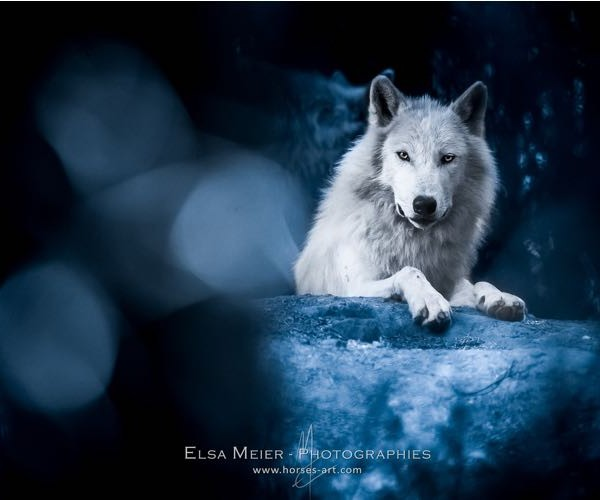 Meet Elsa Meier, pet-photographer extraordinaire