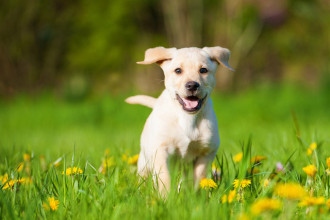 Aidez votre chien âgé à rester mobile