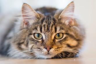 L'importance de la stimulation mentale pour votre chat