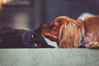 Les solutions pour faire garder votre animal