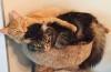 site de chat cochon rencontre 18