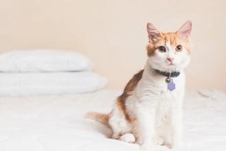 Typhus in cats