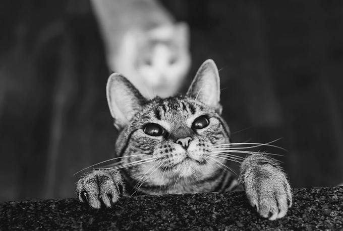top 25 des photos de chats en noir et blanc yummypets. Black Bedroom Furniture Sets. Home Design Ideas