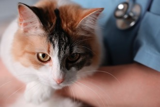 Chiens et chats: attention aux traitements contre les…