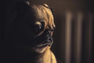 Comportements étranges, mon chien est-il stressé ?