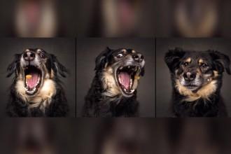 Des chiens et des friandises par Christian Vieler