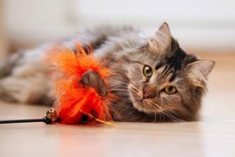 Quels sont les jouets à bannir pour les chats ?