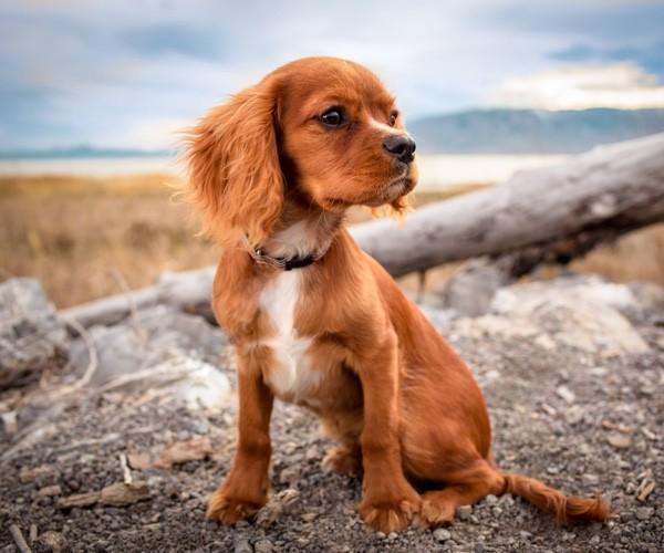 Découvrez The Place To Dog, où sortir avec son chien ?