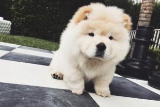 Connaissez-vous Todd, le chien de Justin Bieber ?