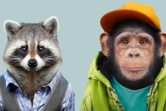 Yago Partal humanise les animaux sur son site Zoo Animals