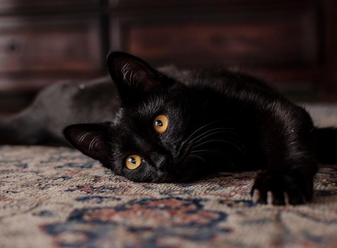 Célèbre Les mythes sur le chat noir, déceler le vrai du faux - Yummypets RW11