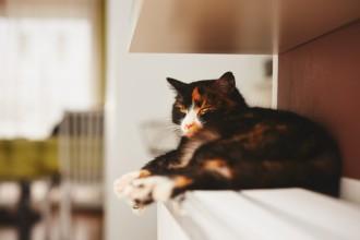 Pourquoi mon chat se perche ?