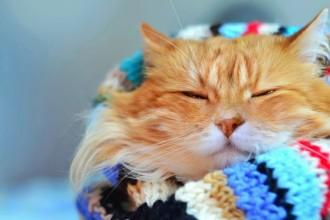 7 trucs cool à propos des chats roux