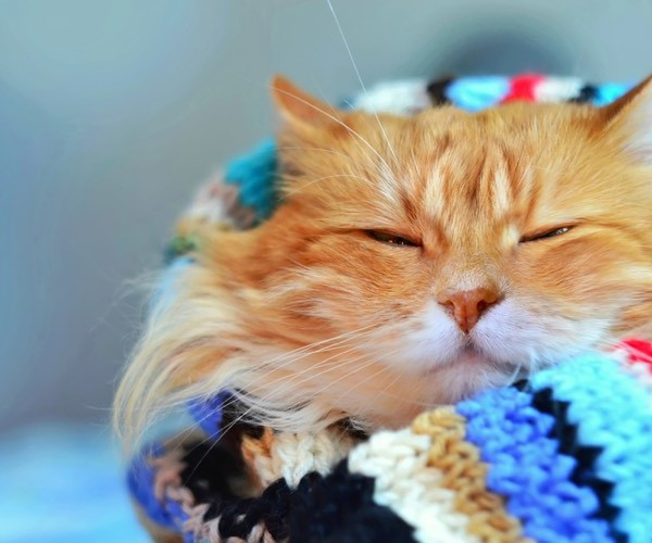 7 cool things you should know about ginger cats