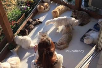 Histoire d'amour entre une femme et ses 12 chats