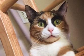 Lilly, la chatte aux yeux captivants…